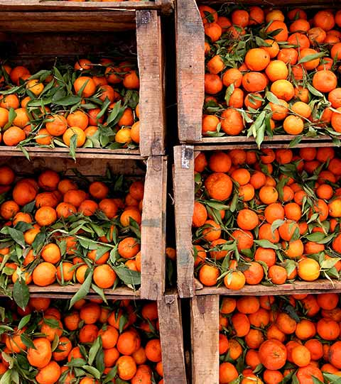 tangerines...Did you know?